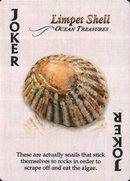 Amazing Shells